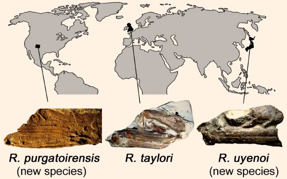 New Gaint Mouth Fish Species Fossil Discovered