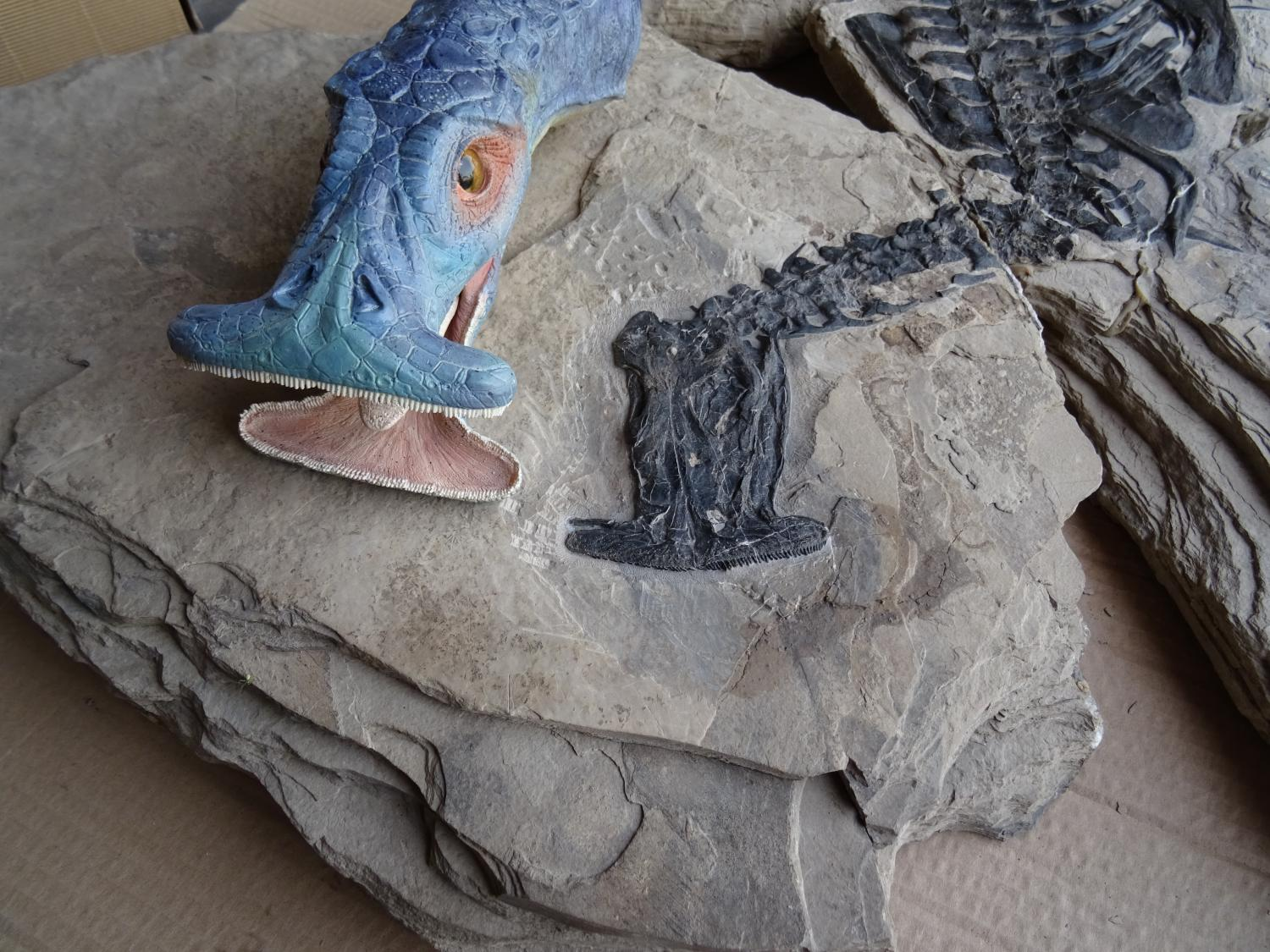 World's first plant-eating marine reptile on Earth