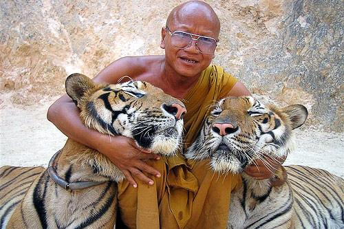 Controversial stories of the Big Cat of The Tiger Temple