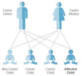 How hereditary diseases remain from generation to generation