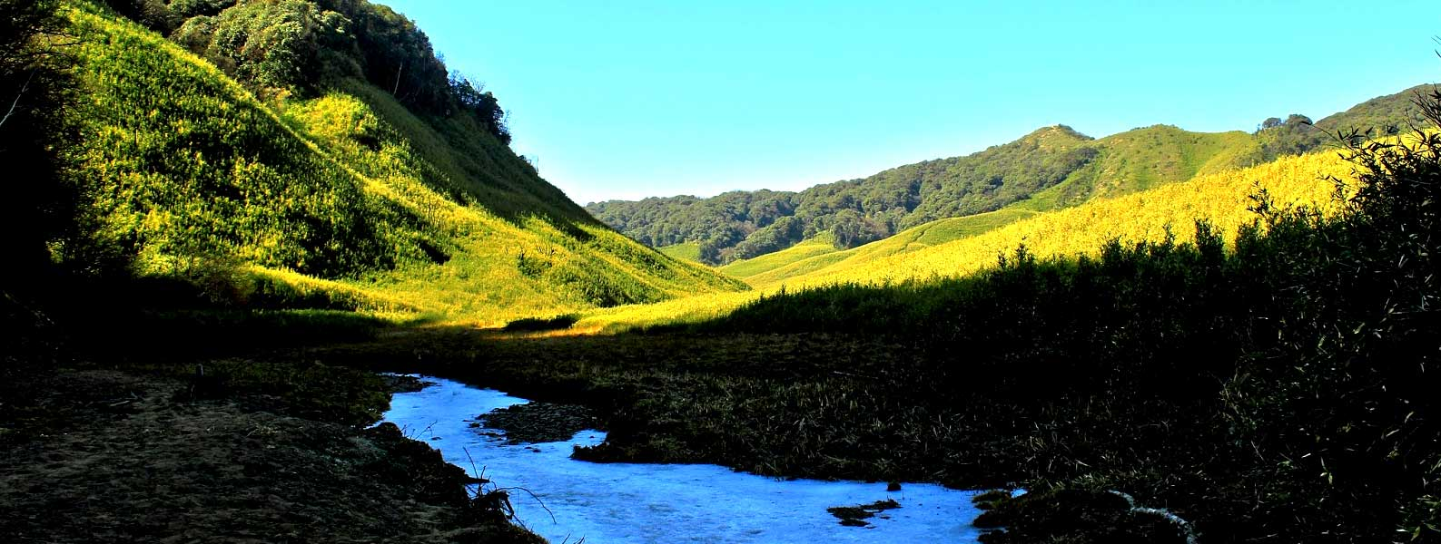 A Glimpse of Nagaland The Land of Headhunter