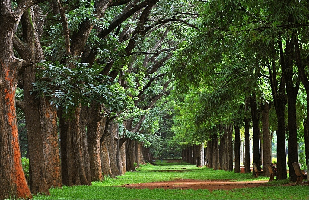 Place to visit in Bengaluru Inidia
