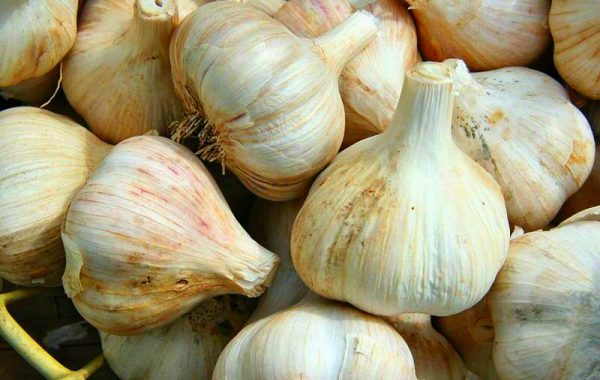 Five Health Benefits of Garlic